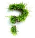 questionmark-grass